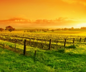 Hunter Valley Day Tour
