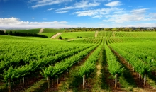 Barossa Wine Tour with Hahndorf