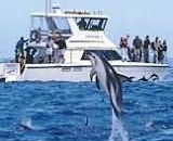 Dolphin Encounter - Spectator
