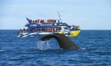 Whale Watch Tour
