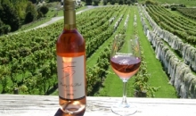 Great Tastes of Matakana Wine Tour