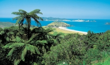The Best of the Bay of Islands