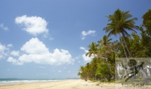 Reef & Rainforest (Cairns to Cairns) 6 nights
